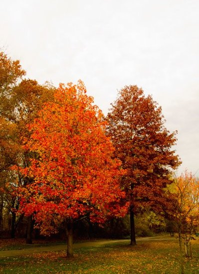 Fall Foliage – Willowbrook Park
