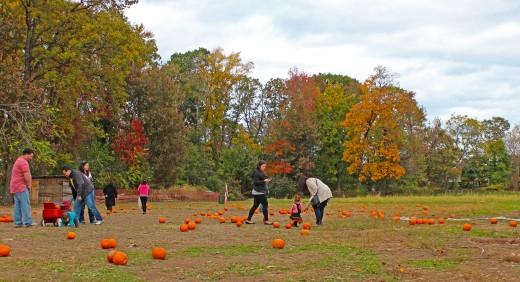 Pumpkin Picking people
